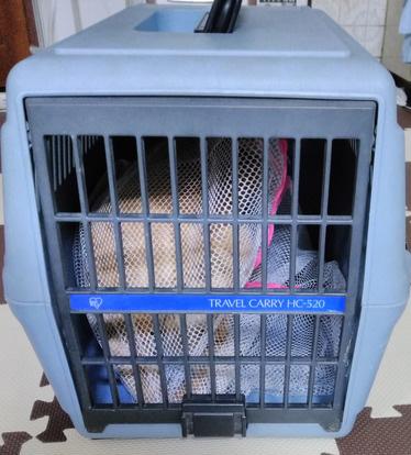 猫の洗濯ネットとキャリーに入れるお手伝い